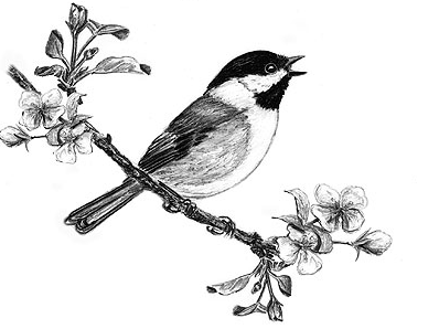 0ee607678f17c5a026af3f563f4a1d97_birds-singing-bird-bird-draw-bird-on-flowers-pets-drawing-of-a-bird-singing_424-298.png